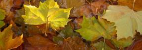 Que faire des feuilles mortes pour améliorer notre santé