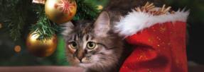 Allez-vous offrir un cadeau à votre animal ?