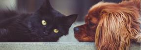Les chiens et les chats ne sont pas toujours ennemis
