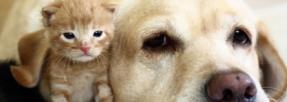 Choisissez bien votre région pour partir en vacances avec votre chien et votre chat !