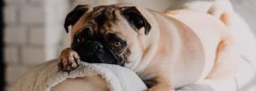 chien-carlin-sofa