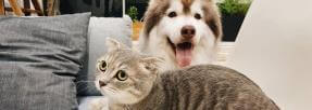 chien-chat-amis