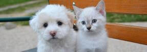 chiens-chats-animaux