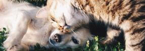chien-chat-calin