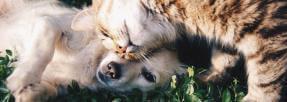 chien-chat-animal