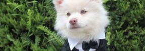 Inviter son chien à son mariage : une nouvelle tendance