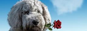 39 % des sondés trouvent leur animal de compagnie plus drôle que leur partenaire