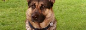 Quel nom apposer sur la médaille de votre chien en 2018 ?