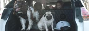 La voiture parfaite pour déplacer ses chiens existe !