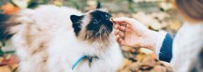 Le chat, un animal aimant ou intéressé ?