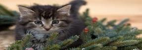 Accueillez votre chat comme il se doit !