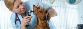Les frais de vétérinaires élevés encouragent les Français à souscrire une assurance chien-chat