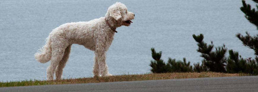Combien de chiens perdus et retrouvés en 2015 ?