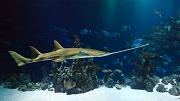 Insolite : gagnez une nuit en chambre subaquatique avec 35 requins
