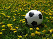football-gazon-fleurs-ballon