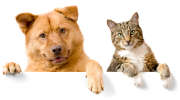 Les animaux de compagnie vivent plus longtemps ! Ils méritent une bonne assurance !