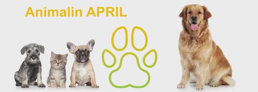 Avec Animalin APRIL, le remboursement des soins vétérinaires simplifié