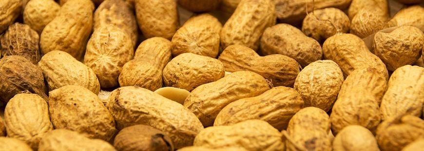 arachide-cacahuete