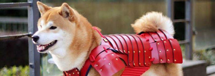 armure-rouge-samourai-chien