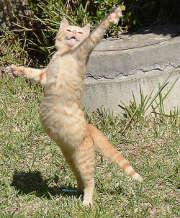 Chiens et chats : attention aux risques du jardin !