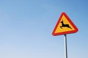 Attention à la collision avec un animal !