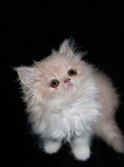 Pourquoi souscrire une assurance chien chat ?