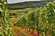 Axa propriétaire de vignobles