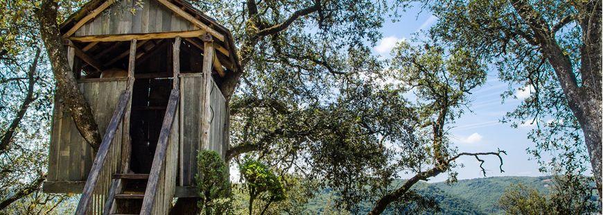 cabane-arbre-habitation