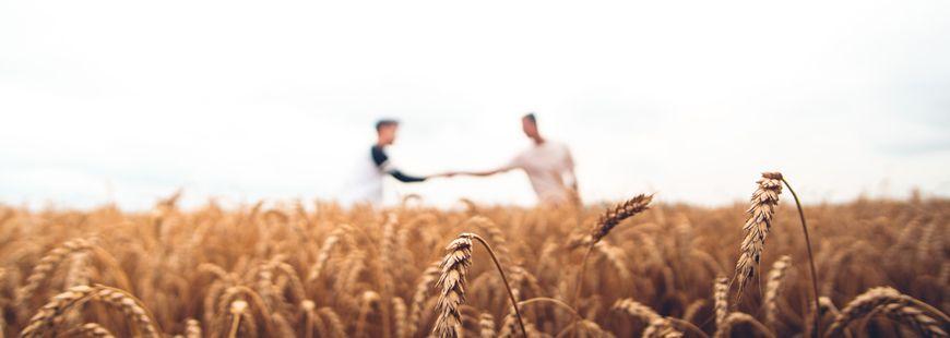 champs-blé-fermiers