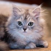 Serez vous un adepte des bars à chat ?