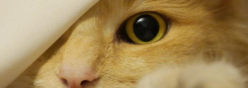 Santé du chat : lutter contre l'obésité féline