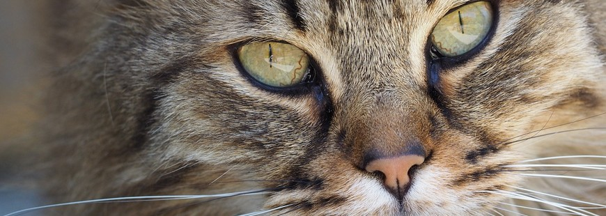 Quels prix pour la stérilisation d'un chat ?