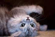 Comment un chat a-t-il pu devenir aussi célèbre sur Internet ?