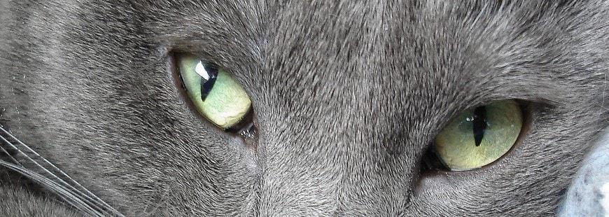 Ce chat a de beaux yeux... mais découvrez ceux de Pam Pam
