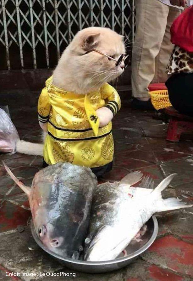 chat-vendeur-poisson-lunette