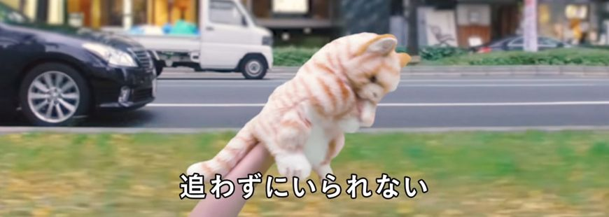 chat-video-japon