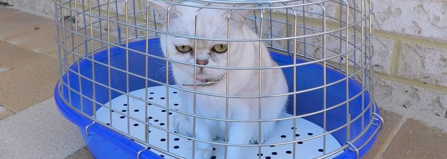 Voyage : quelques précautions à prendre pour son chat