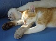 Votre chat devra avoir 3 mois pour être assuré !