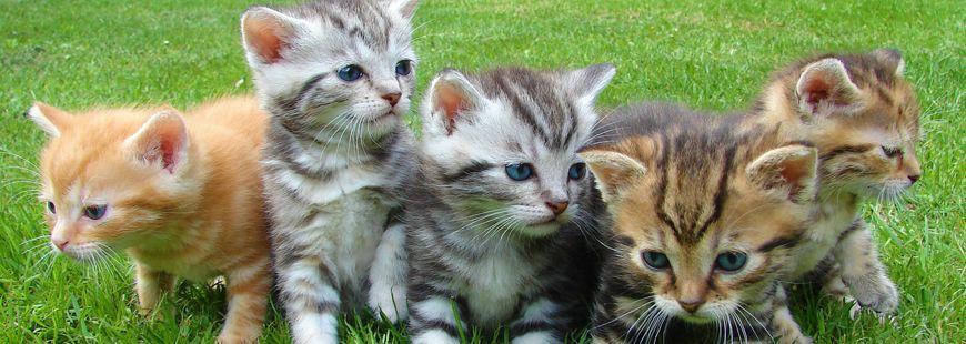 Bien manger est important pour les chats