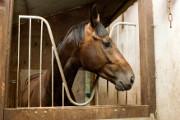 la garantie indispensable quand on fait de l'équitation est sans doute la Responsabilité Civile