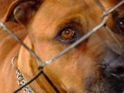 maltraitance envers les animaux : 160 chiens dans un refuge insalubre