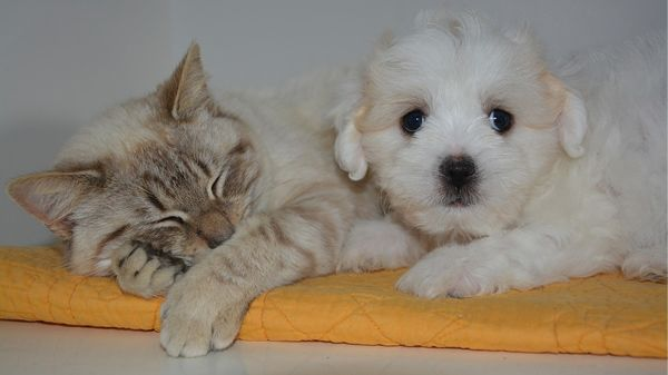chien-chat-tapis