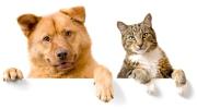 Chien, chat, protégez le avec une bonne mutuelle