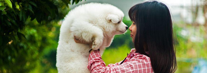 Pensez à votre chien ou votre chat en cas de forte chaleur