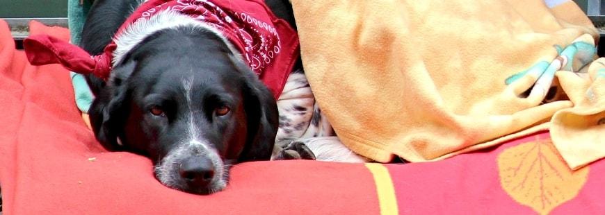 Un député souhaite aider les Français à stériliser leurs chiens