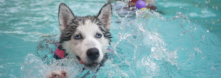 Surveiller les baignades du chien
