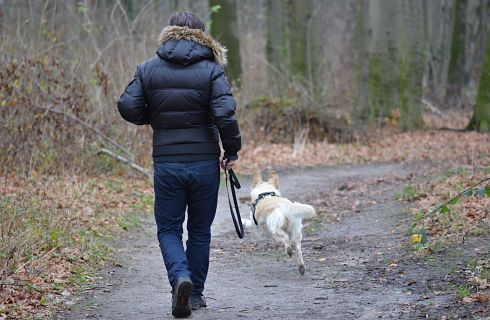 foret-homme-promenade-chien-laisse