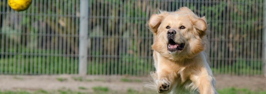 63 % des chiens seniors restent plus de 6 mois dans un refuge