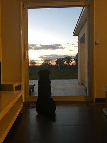 chien-seul-fenetre-paysage