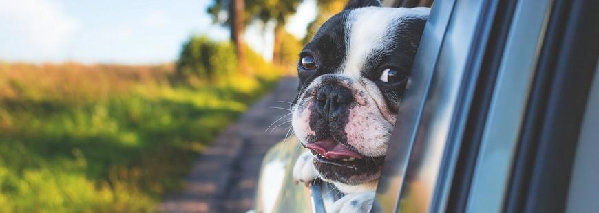 Un site qui cherche pour vous les endroits où vous pouvez emmener votre chien